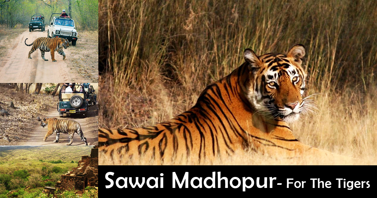 Sawai Madhopur Best Places to visit in Rajasthan